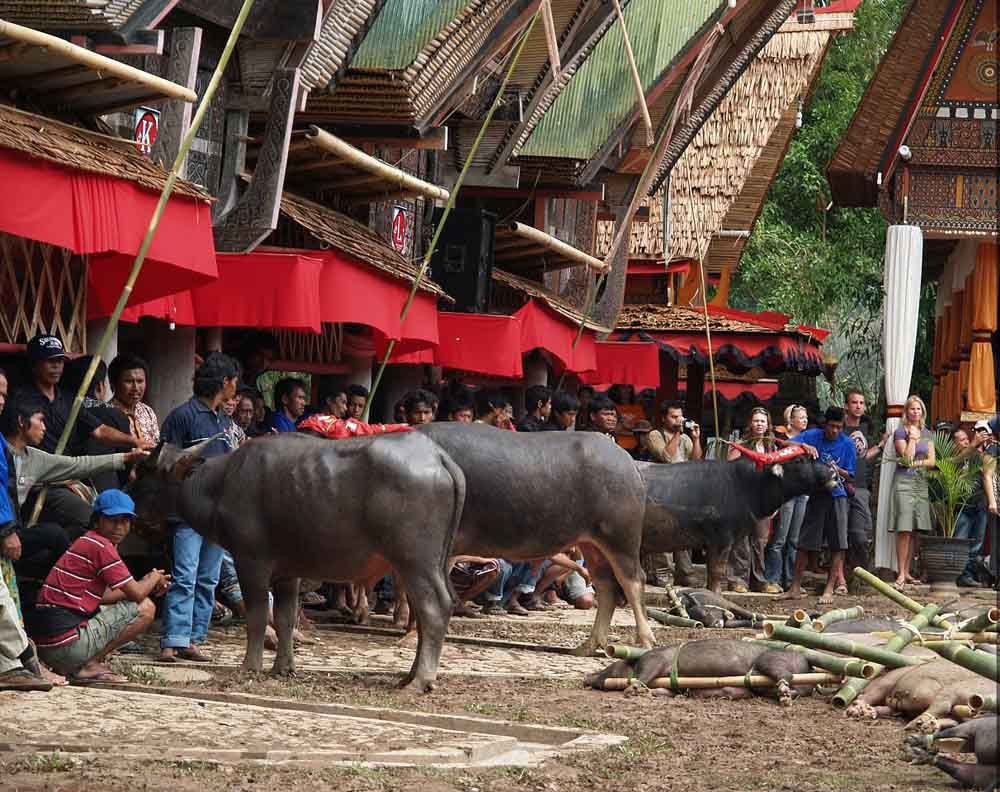 Toraja tour package